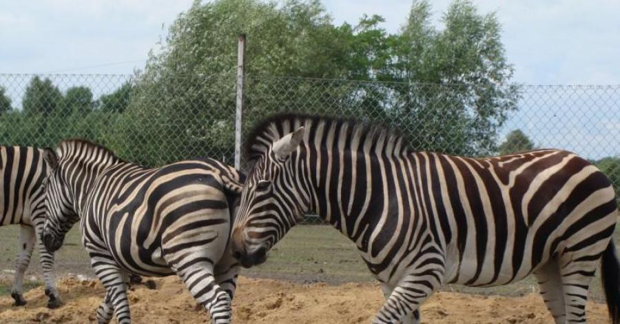 Zoo Safari w Świerkocinie - zdjęcie