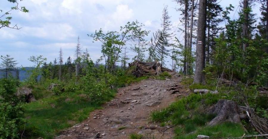Stożek w Beskidzie Śląskim - zdjęcie