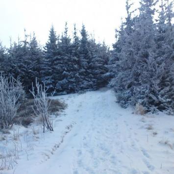 Babia Góra zimową porą. - zdjęcie
