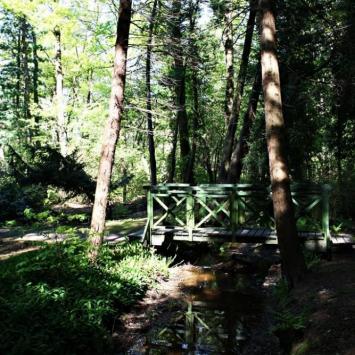 Arboretum w Lipnie