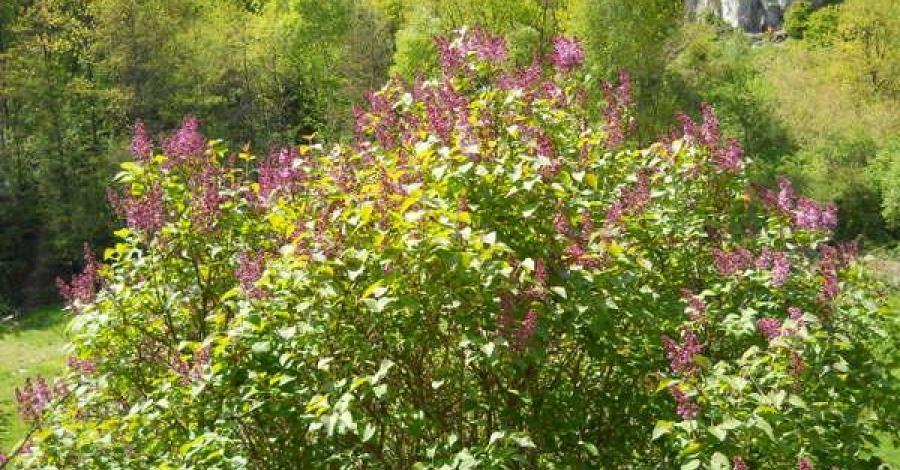 Dolina Kobylańska- wytwór natury ... - zdjęcie