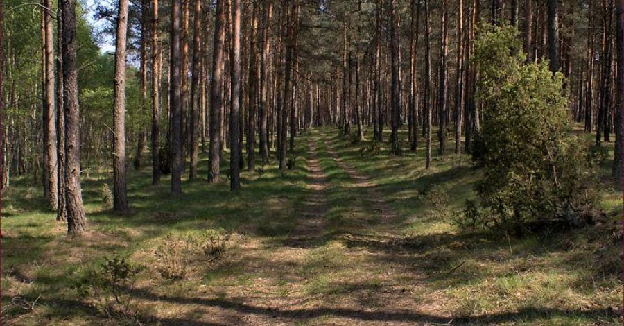 Park Narodowy Bory Tucholskie - zdjęcie