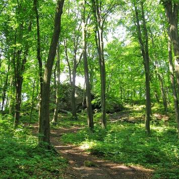 Rezerwat Zielona Góra na Jurze