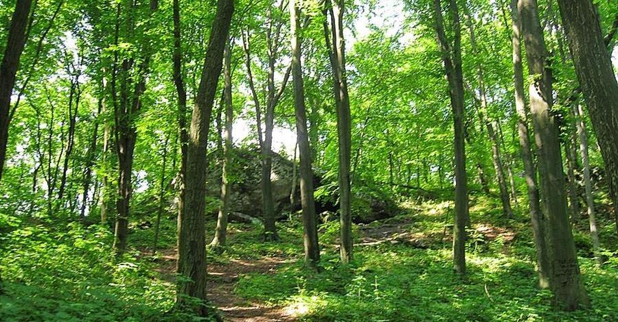 Rezerwat Zielona Góra na Jurze, Magdalena