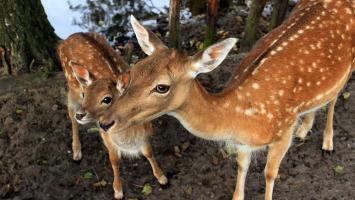Mini Zoo w Kokotku - zdjęcie