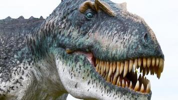 Dinolandia w Inwałdzie i Wadowice - zdjęcie