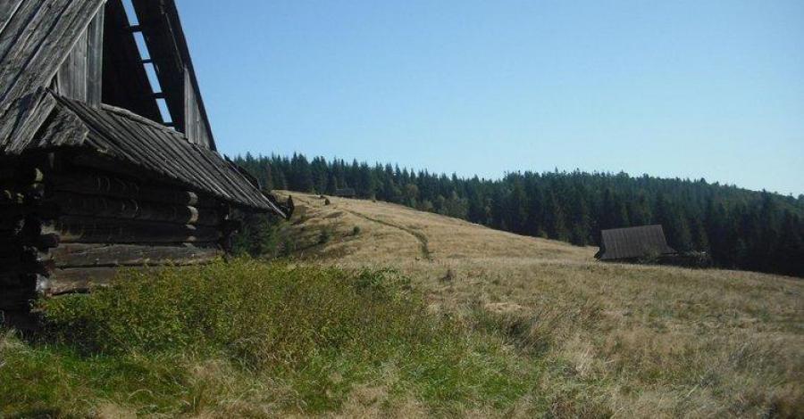 Kudłoń w Gorcach - zdjęcie