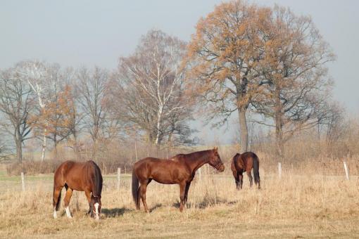 Ośrodek Jeździecki w Szałszy