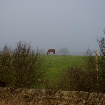 Bakewell - zdjęcie