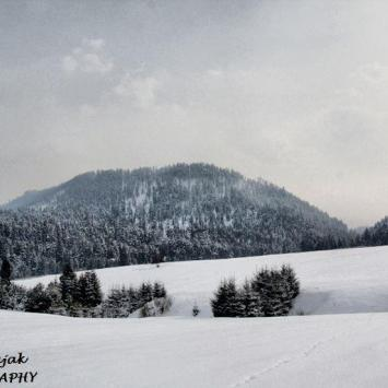 Góra Żar 879m n.p.m (Pieniny Spiskie) - zdjęcie