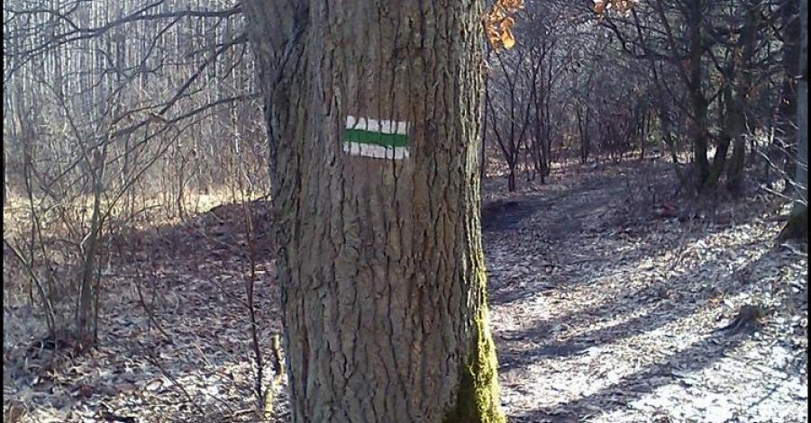 na szlaku Bydgoszcz - Chmielniki (pieszy, zielony) - zdjęcie