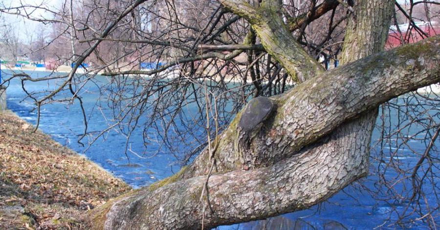 Wiosenny Park Chorzowski - zdjęcie