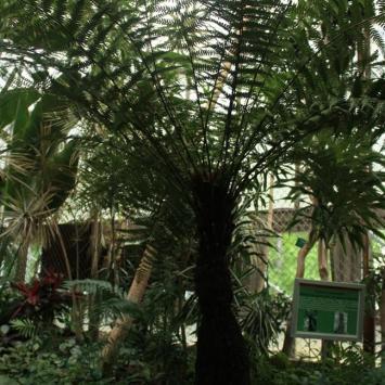 Gliwicka Palmiarnia odsłona szósta - zdjęcie