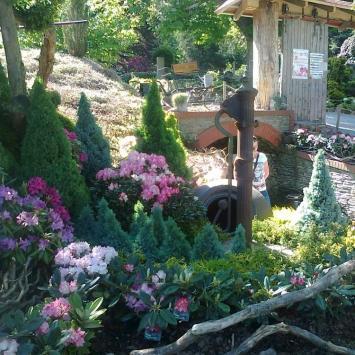 Arboretum Wojsławice - zdjęcie