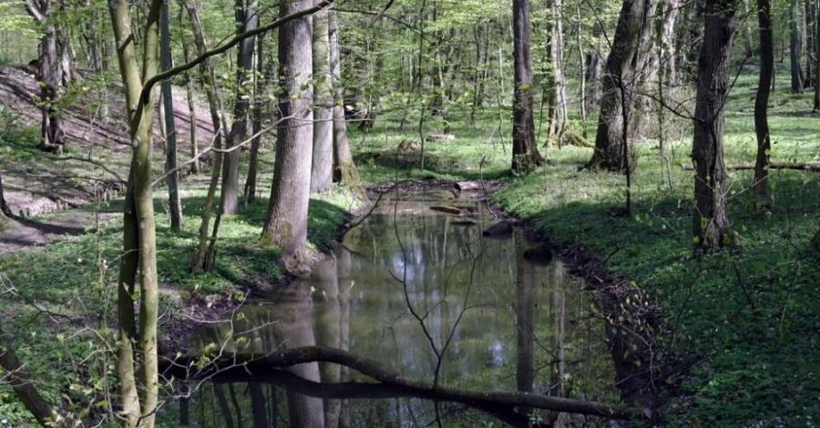 Dolina Siedmiu Młynów w Szczecinie - zdjęcie