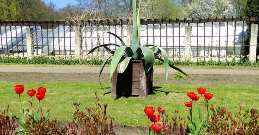 Ogród Botaniczny w Oliwie - zdjęcie