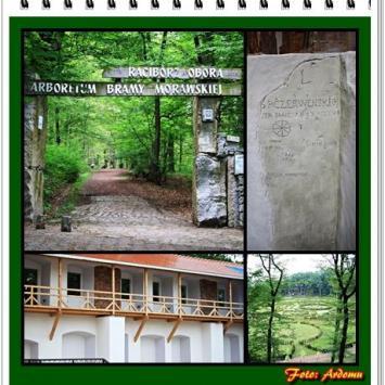 Racibórz: Arboretum i Zamek Pistowski - zdjęcie