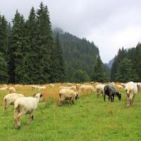 Tatry Zachodnie - Dolina Kościeliska