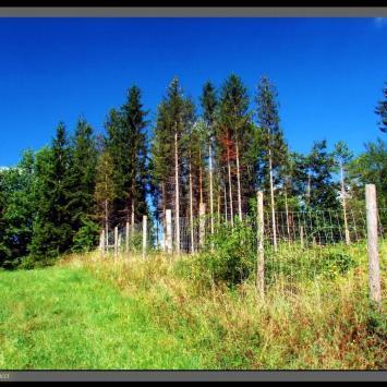 Pogórze Cieszyńskie: Góra Chełm (464 m n.p.m)