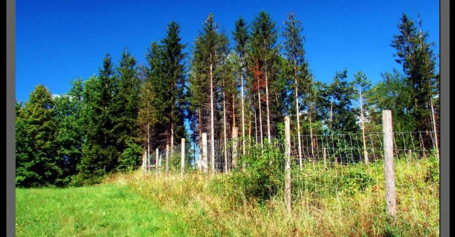 Pogórze Cieszyńskie: Góra Chełm (464 m n.p.m) - zdjęcie