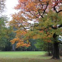 Park w Świerklańcu jesienią