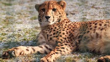 Śląskie Zoo zimą - zdjęcie