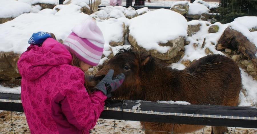 Z wizytą w Wiosce Świętego Mikołaja w Bałtowie - zdjęcie