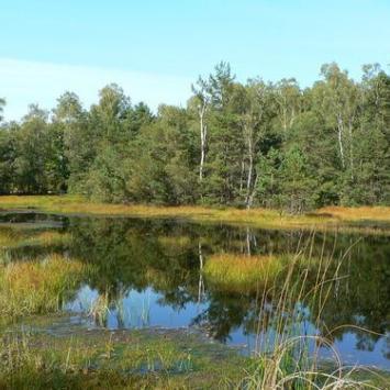 Rezerwat Przyrody w Przecławiu