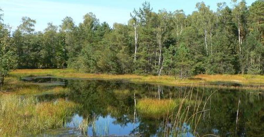 Rezerwat Przyrody w Przecławiu - zdjęcie