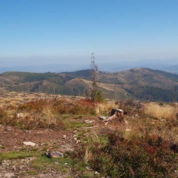 Barania Góra w Beskidzie Śląskim