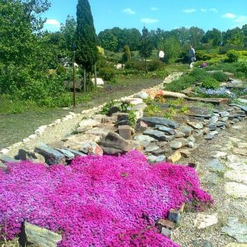 Arboretum w Stradomi