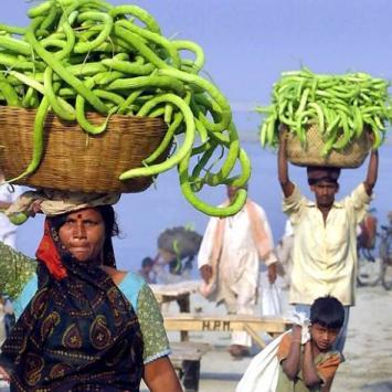 Indie - zdjęcie