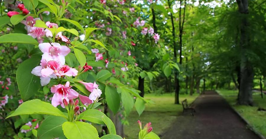 Ogród Botaniczny w Zabrzu - zdjęcie