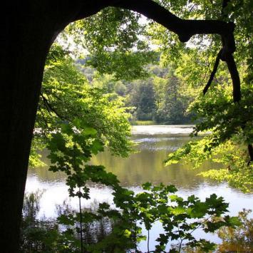 Złoty Potok - Staw Sen Nocy Letniej
