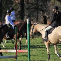 Konie w Zbrosławicach