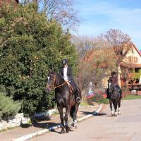 Konie Zbrosławice