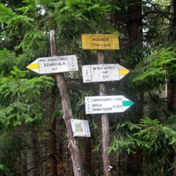 Kozińce w Beskidzie Śląskim