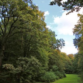 Park Repecki w Tarnowskich Górach