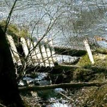 Rezerwat Buczyna w Przyłęku - zdjęcie
