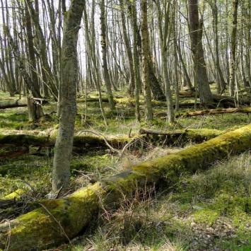 Słowiński Park Narodowy na Pomorzu, toja1358