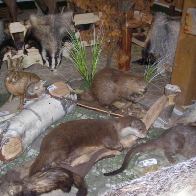 Muzeum Knieja w Nowosiółkach