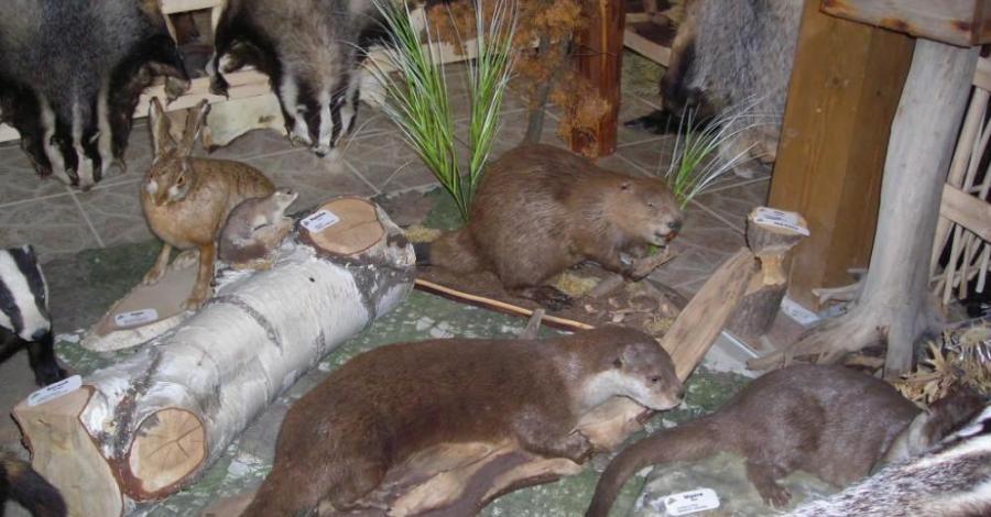 Muzeum Knieja w Nowosiółkach - zdjęcie