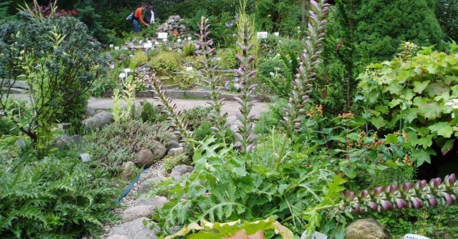 Ogród Botaniczny w Gołubiu - zdjęcie