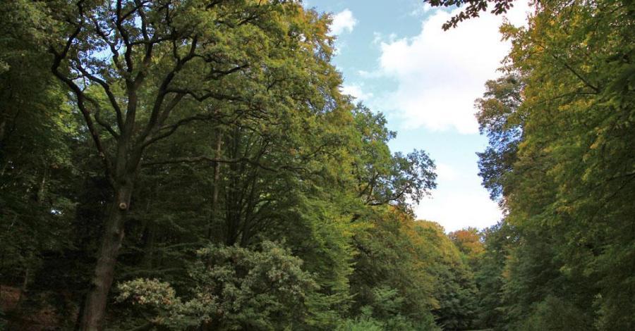Park Repecki w Tarnowskich Górach, Anna Piernikarczyk