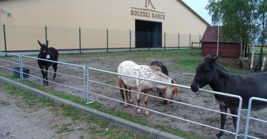 Roleski Ranch w Starych Żukowicach, mokunka