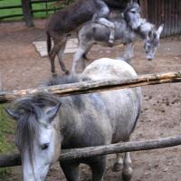 mini zoo w Raciborzu
