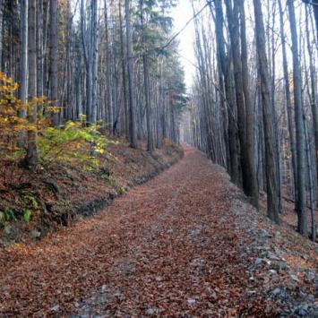 liście, liście i liscie szlak niebieski.