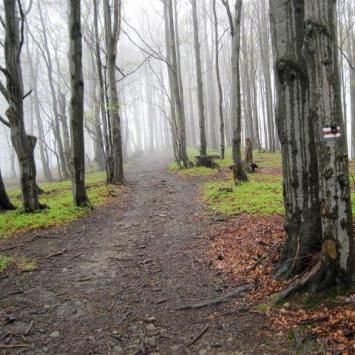 Beskid Węgierski w Beskidzie Śląskim