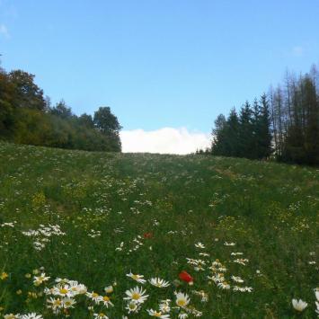 Dolina Dłubni na Jurze - zdjęcie
