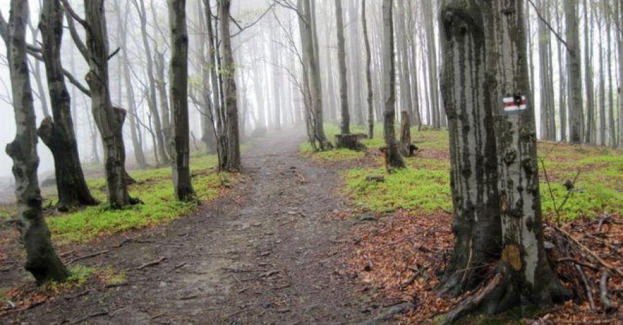 Beskid Węgierski w Beskidzie Śląskim - zdjęcie